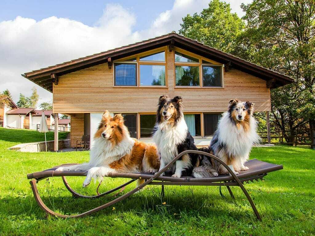 Drei Hunde sitzen auf der Liege im Gutshotel Feuerschwendt