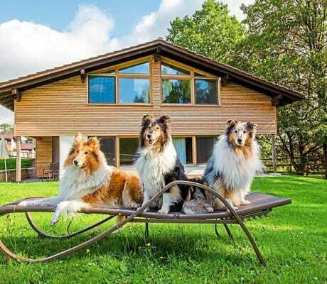 Drei Hunde auf einer Liege vor dem Haus_GutshotelFeuerschwendt_Neukirchen