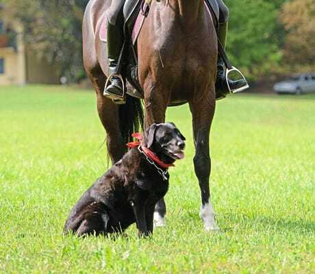 Mädchen auf einem Pferd und ein Hund_GutshotelFeuerschwendt_Neukirchen