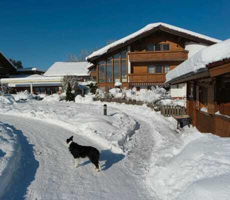Hund auf dem schneebedeckten Weg vor dem Hotel Sommer