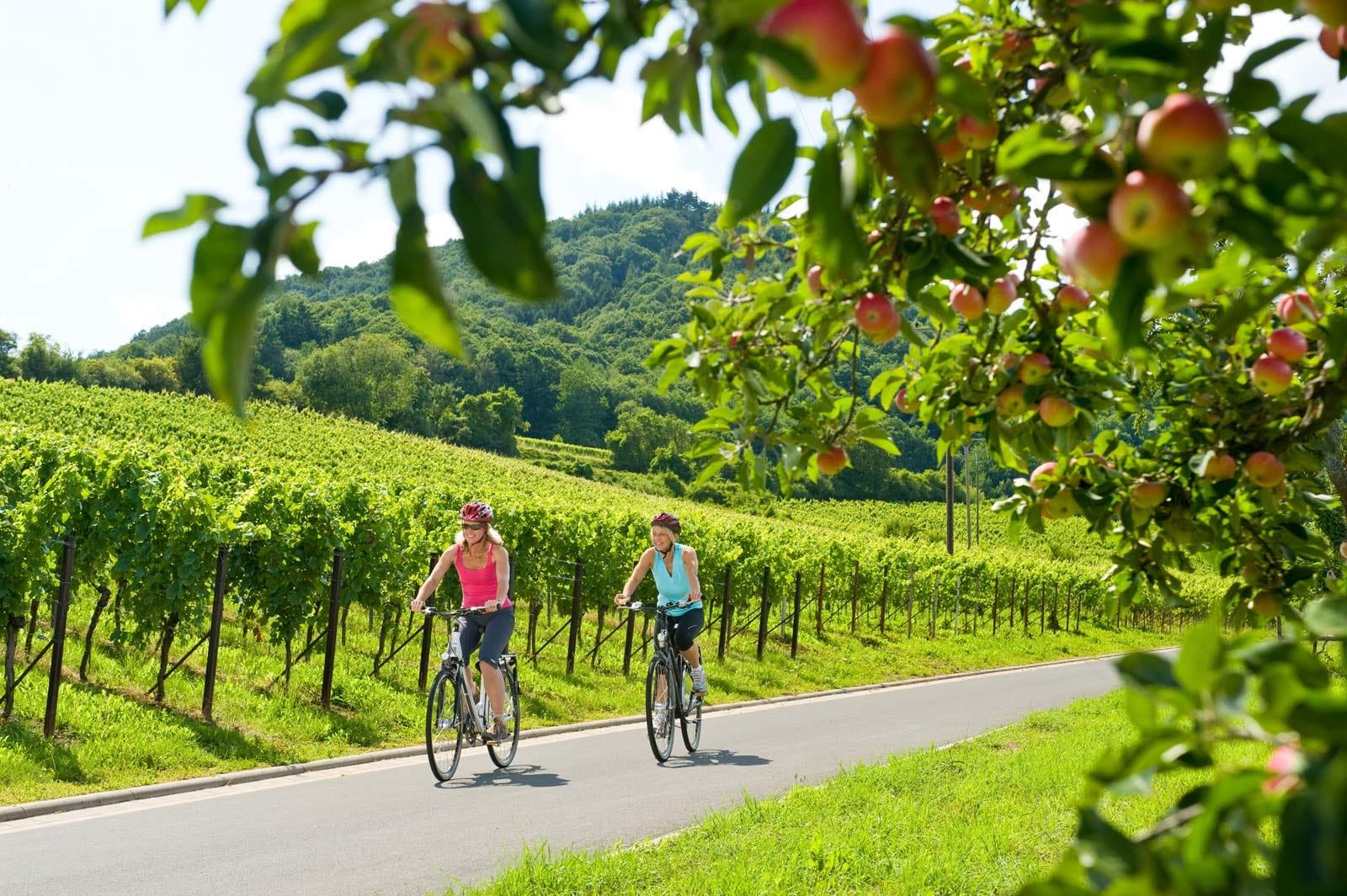 Radfahrer auf dem Radweg Deutsche Weinstraße bei Leinsweiler