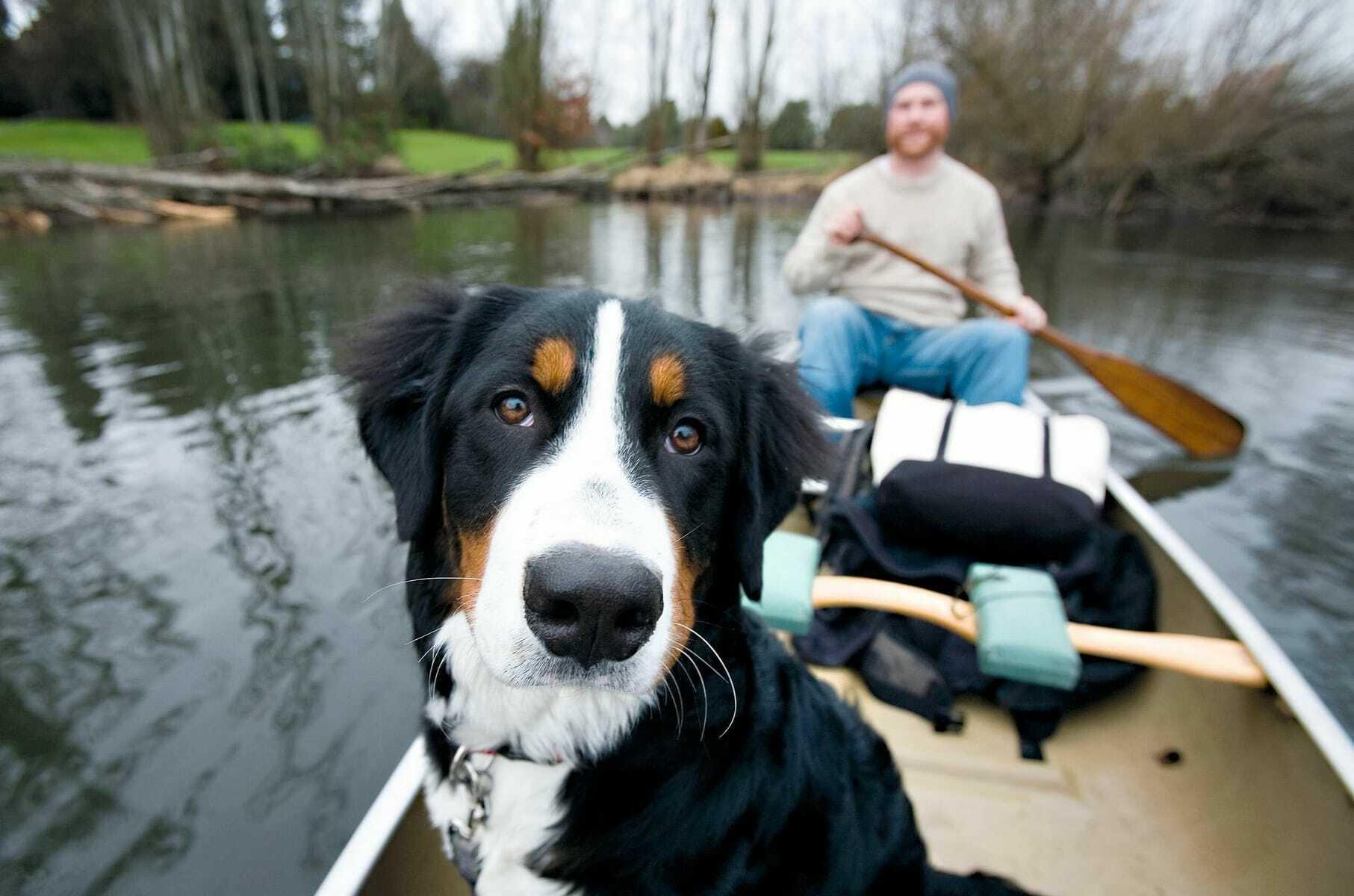 Mann mit Hund auf einem Boot auf einem See_Seehotel_Heidehof_Klein_Nemerow