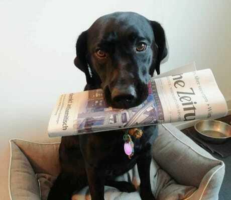 Hund Sissi mit Zeitung in der Schnauze, Severins Resort & Spa