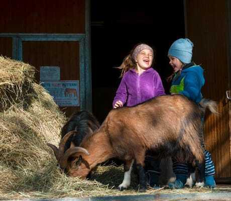 Zwei Kinder streicheln im Stall eine Ziege_Ulrichshof_Rimbach