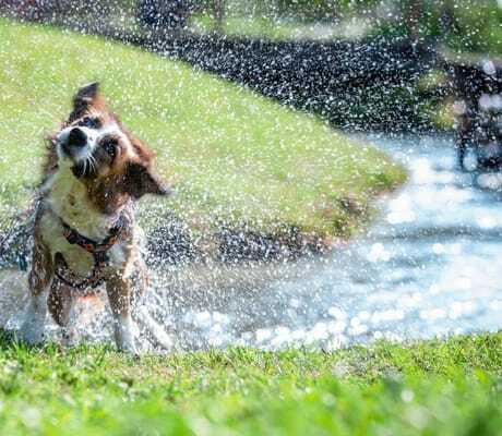 Hund schuettelt sich im Almfrieden Hotel