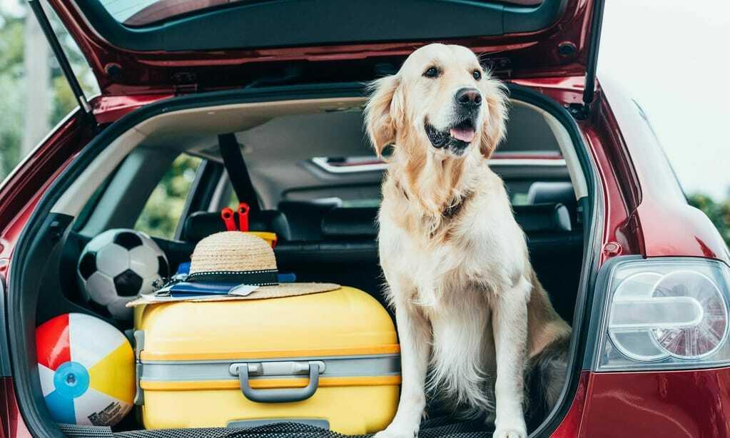 Hund sitzt im Kofferraum, bereit für Urlaub im Hundehotel