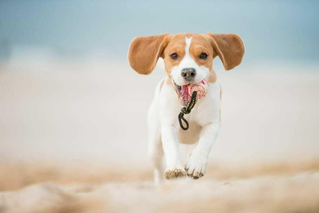 Hundestraende Nordsee_kleiner Hund mit Ball