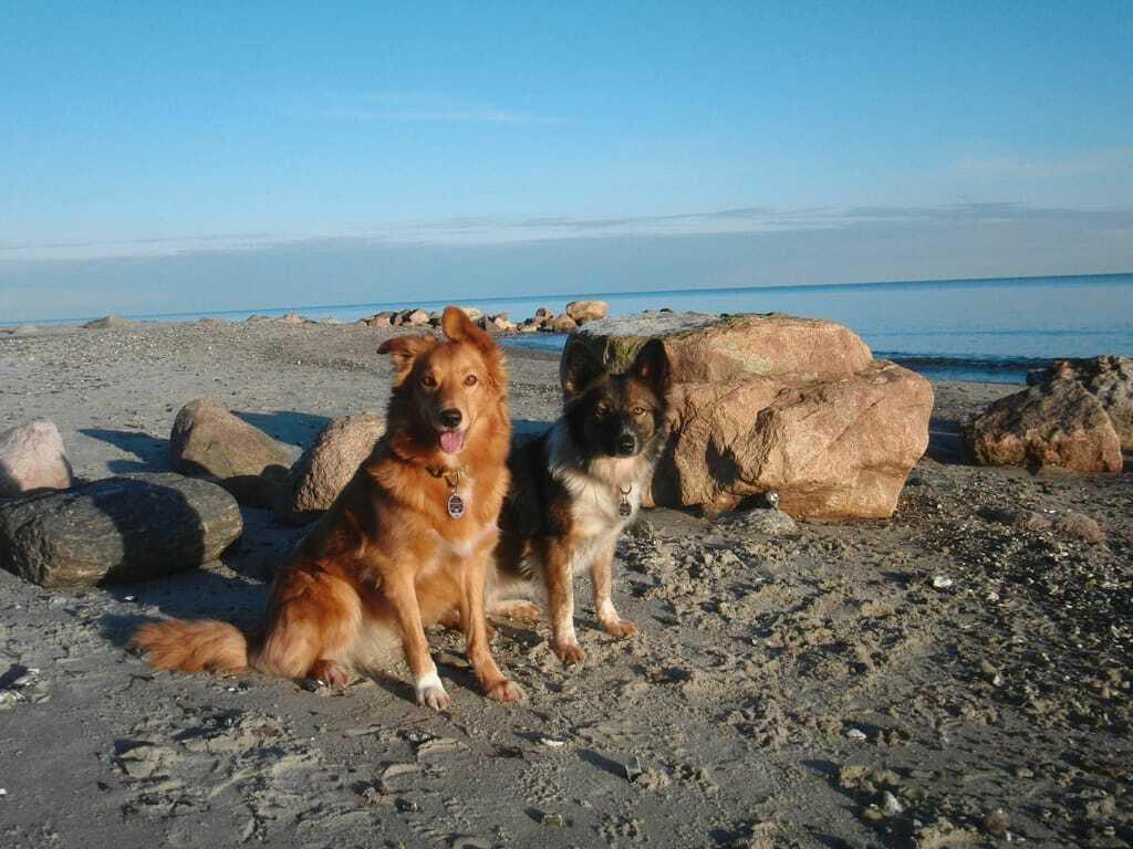 Zwei Hunde sitzend am Ostseestrand