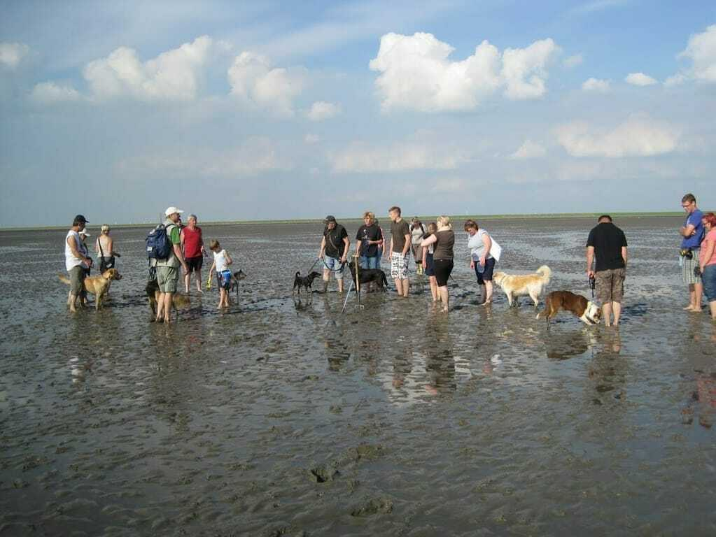 Hundestrände an der Nordsee_Wattwanderung mit Hunden