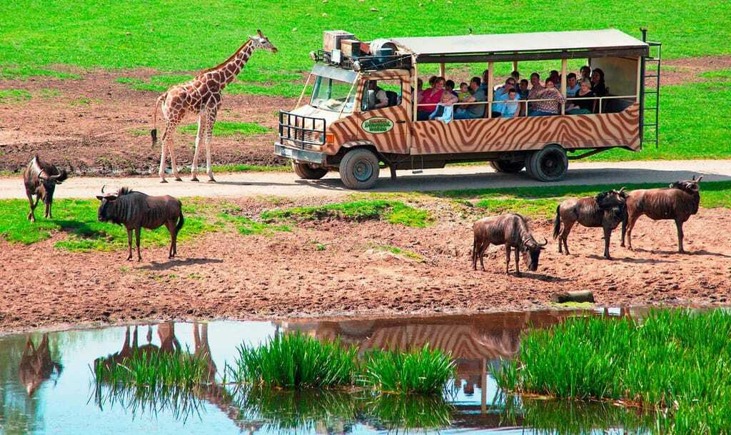 Freizeitpark Serengeti-Park Hodenhagen Safari-Tour Afrika Giraffe
