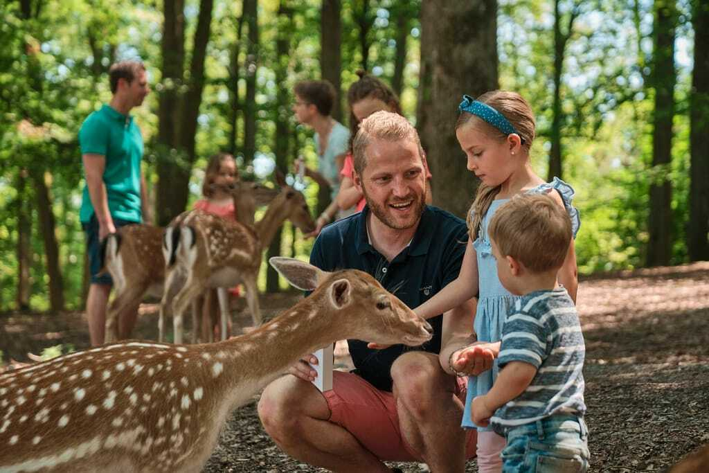 Freizeitpark Erlebnispark Tripsdrill Wildtiergehege Rehe Tiere Füttern Familie