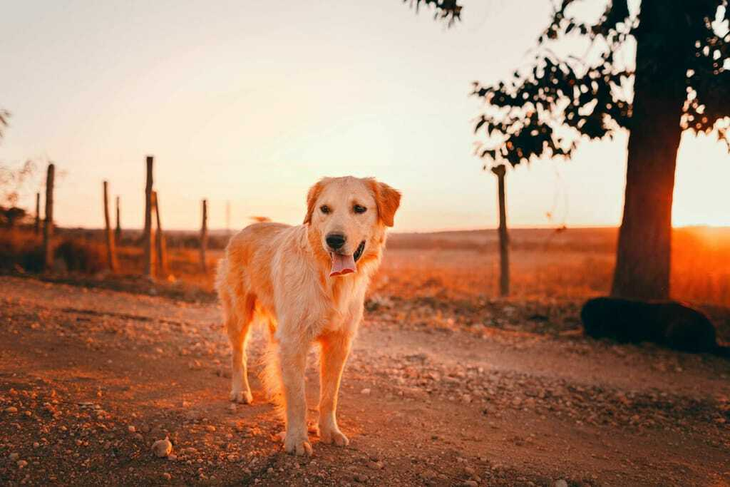 Hundehaftpflichtversicherun Hund Urlaub Sonnenuntergang Gassi