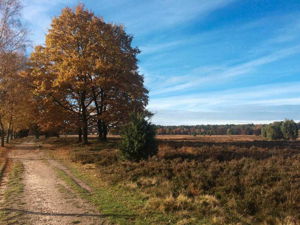 Reiseziele im Oktober Heide Landschaft Herbst
