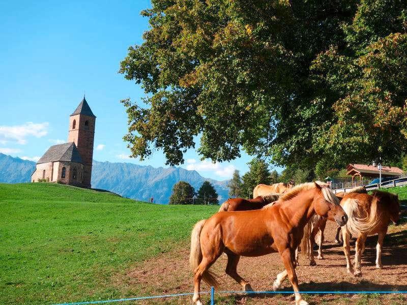 Reiseziele im Oktober Pferde Berge Südtirol Alpen