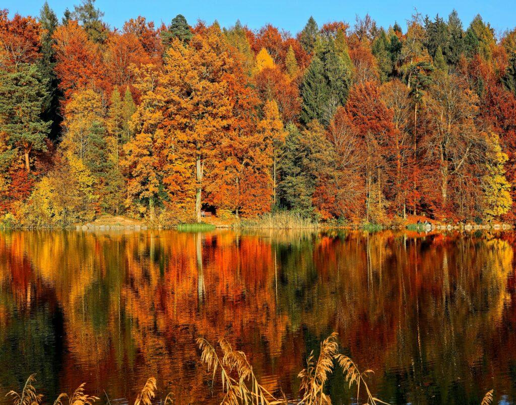 Reiseziele im Oktober Herbst Wald Bäume See
