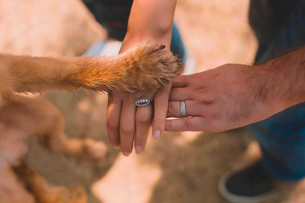 Hundepfote auf Händen von Frau_Wandern mit Hund