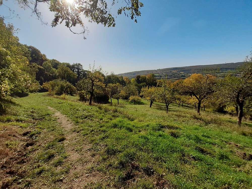 Blick auf Streuobstwiesen auf dem Blies-Grenz-Weg_Wandern mit Hund