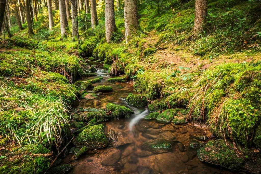 Waldpfad im Teinachtal_Wandern mit Hund