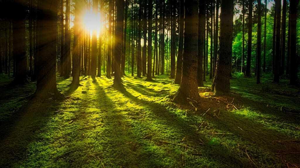 Wald mit durscheinender Sonne, ideal zum Waldbaden