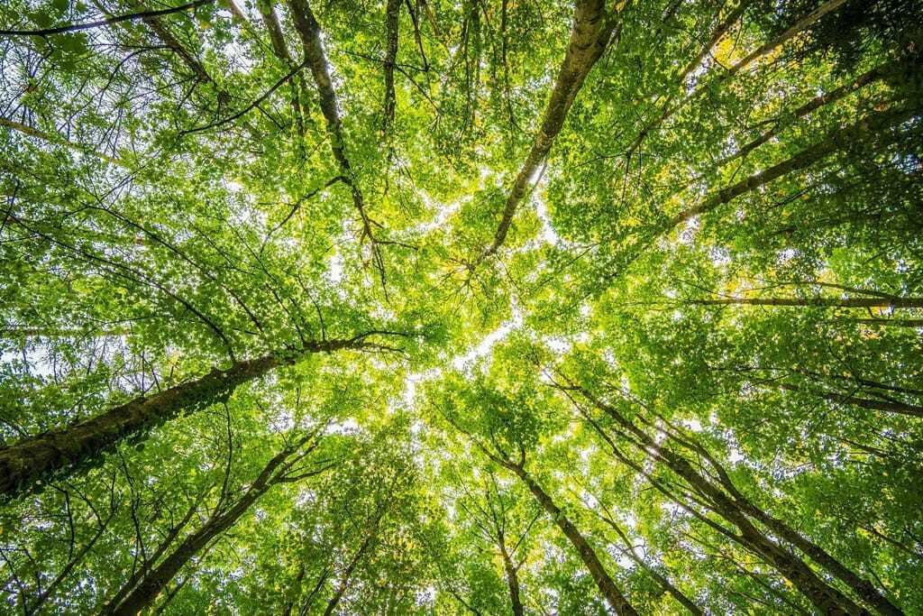 Waldbaden mit Blick in die Baumkrone