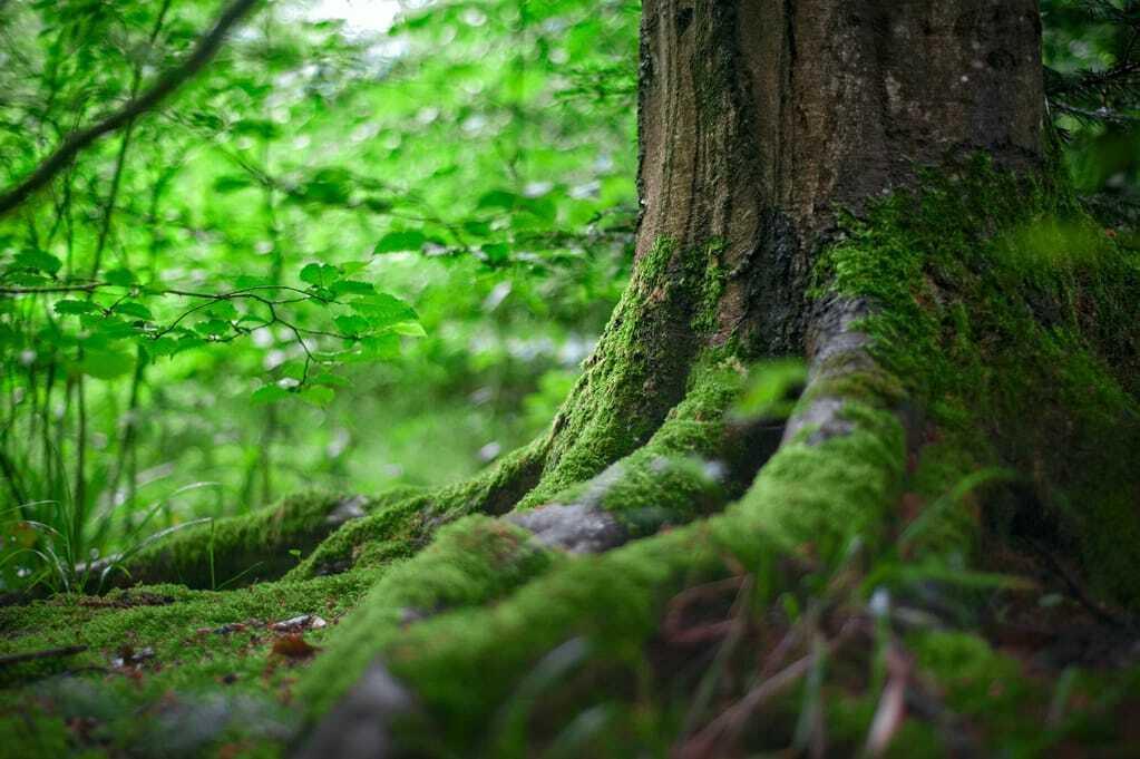 Nahaufnahme von Baumstamm und Wurzelwerk