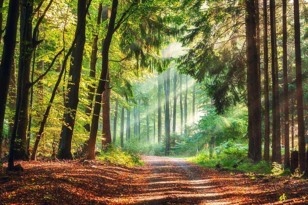 Wanderweg mit Sonnenstrahlen