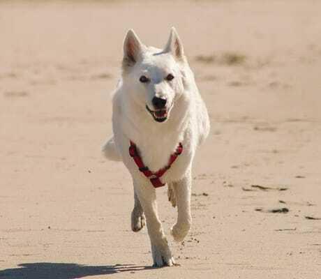 weißer Hund am Strand_ambassador