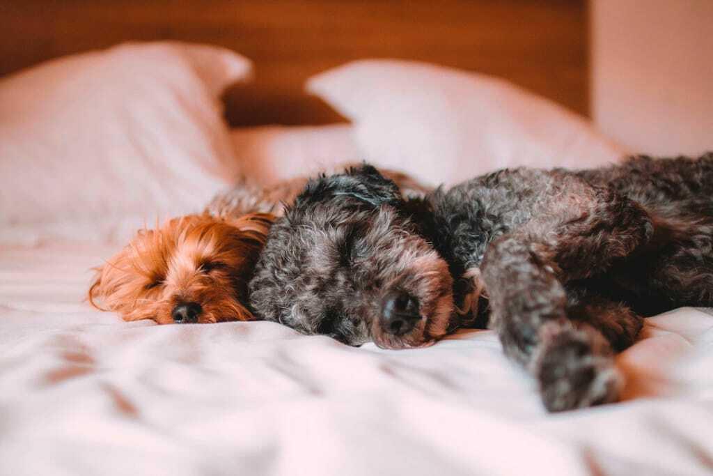 Hunde schlafend auf dem Bett_ Fundsachen_im_Hotel