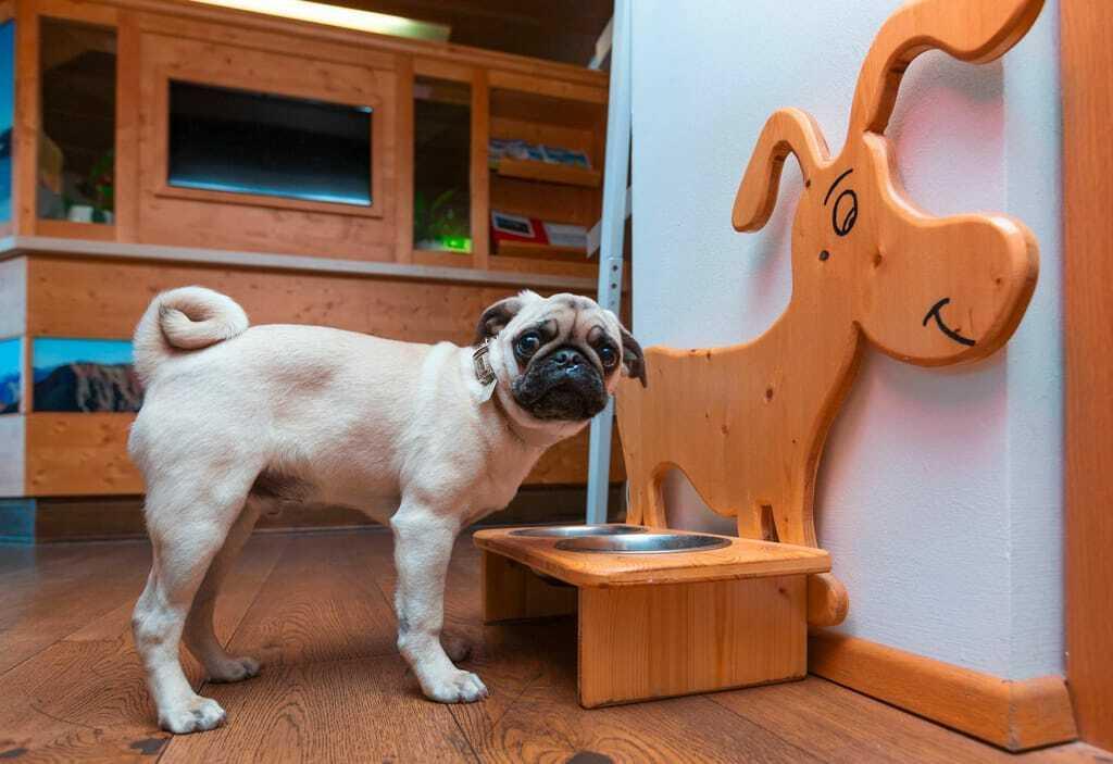 Ein Mops steht vor einem Hundenapf