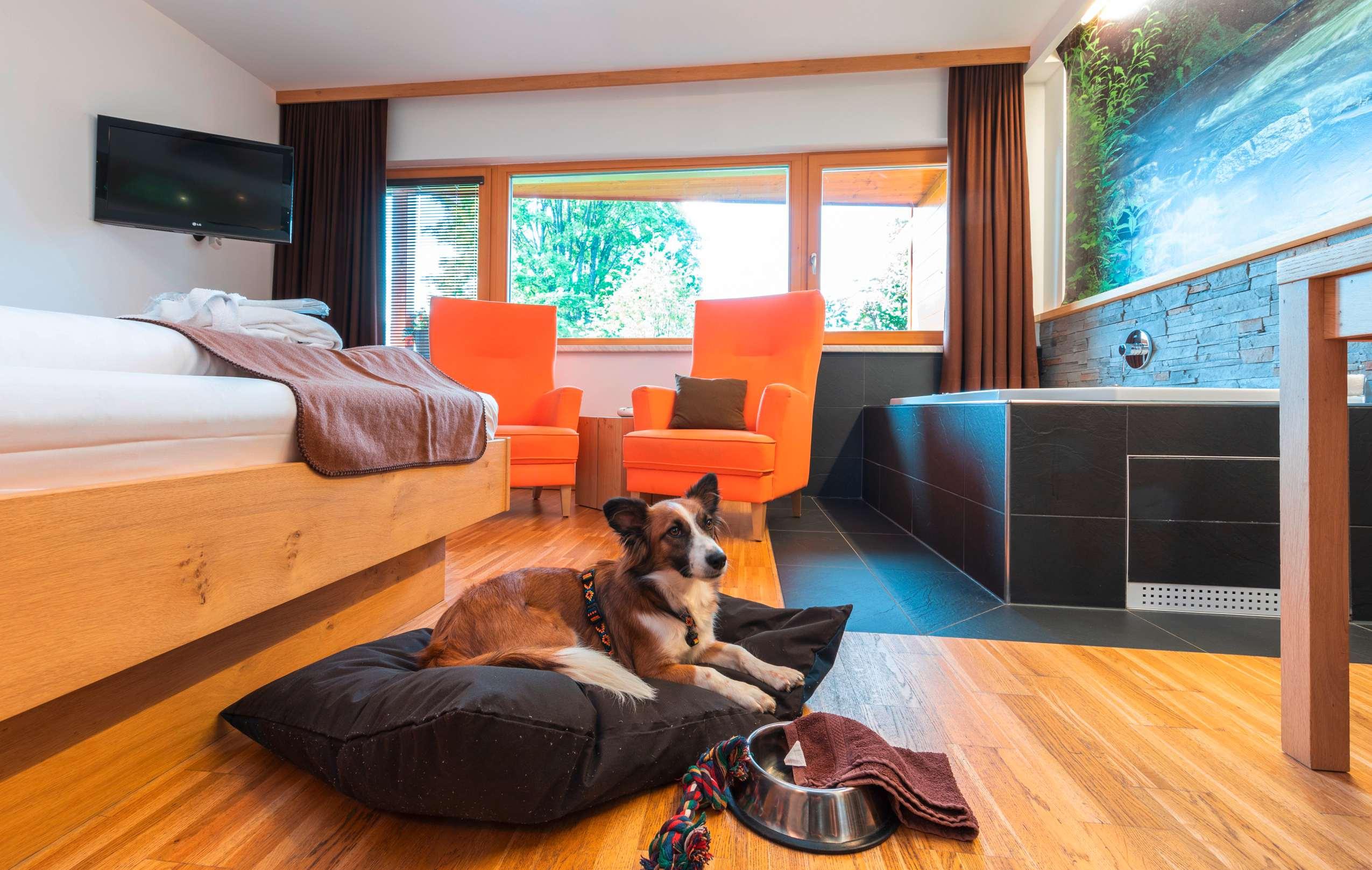 Hotelzimmer in dem ein Hund auf eigenem Hundebett liegt