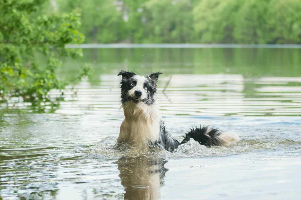Hund plantscht im Wasser im See